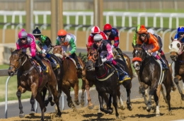 Horse betting systems and how to use them?